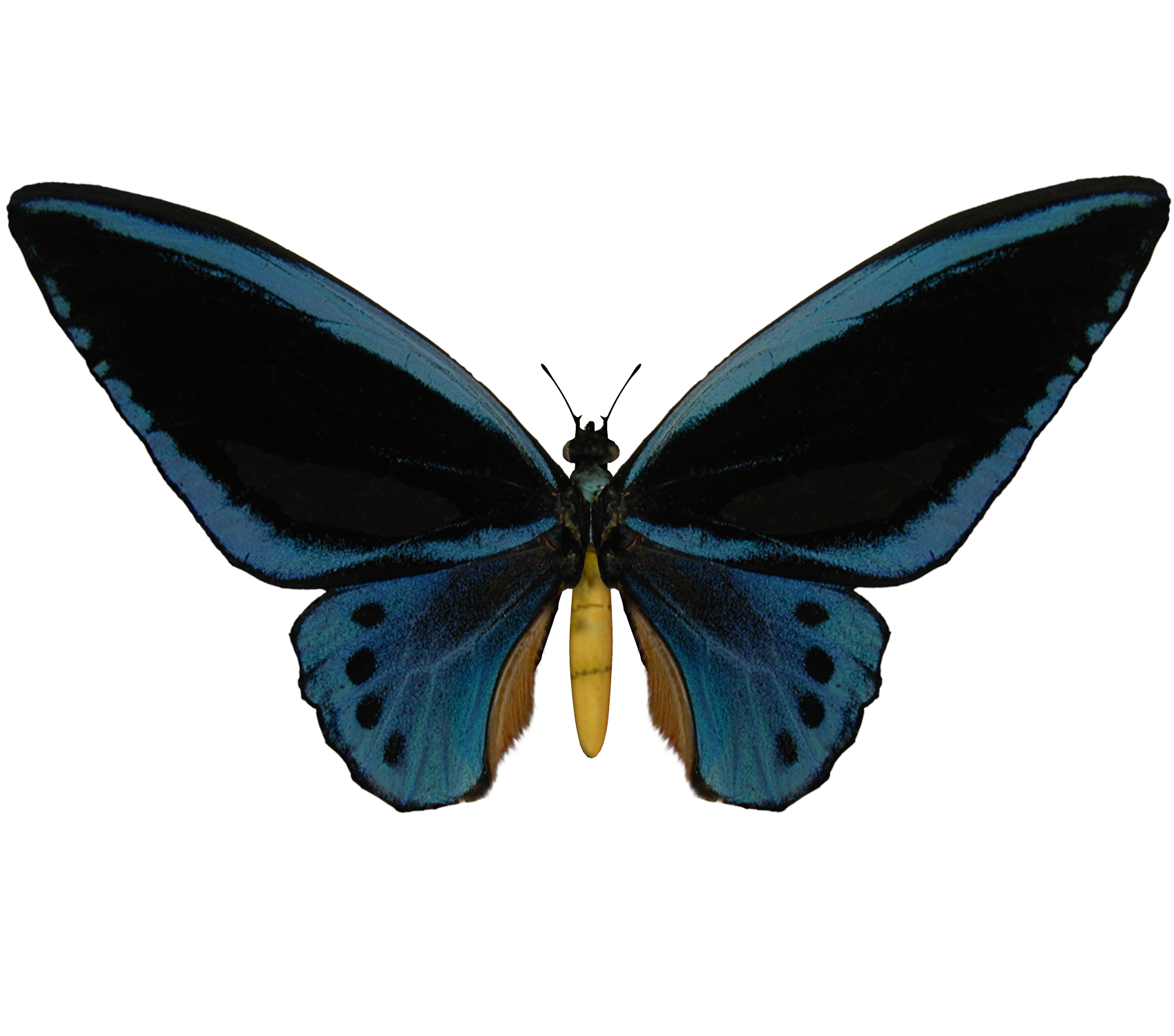 Transparent Background E-s butterfly ii by elevit- Butterfly Tumblr ...