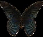 E-S Butterfly III