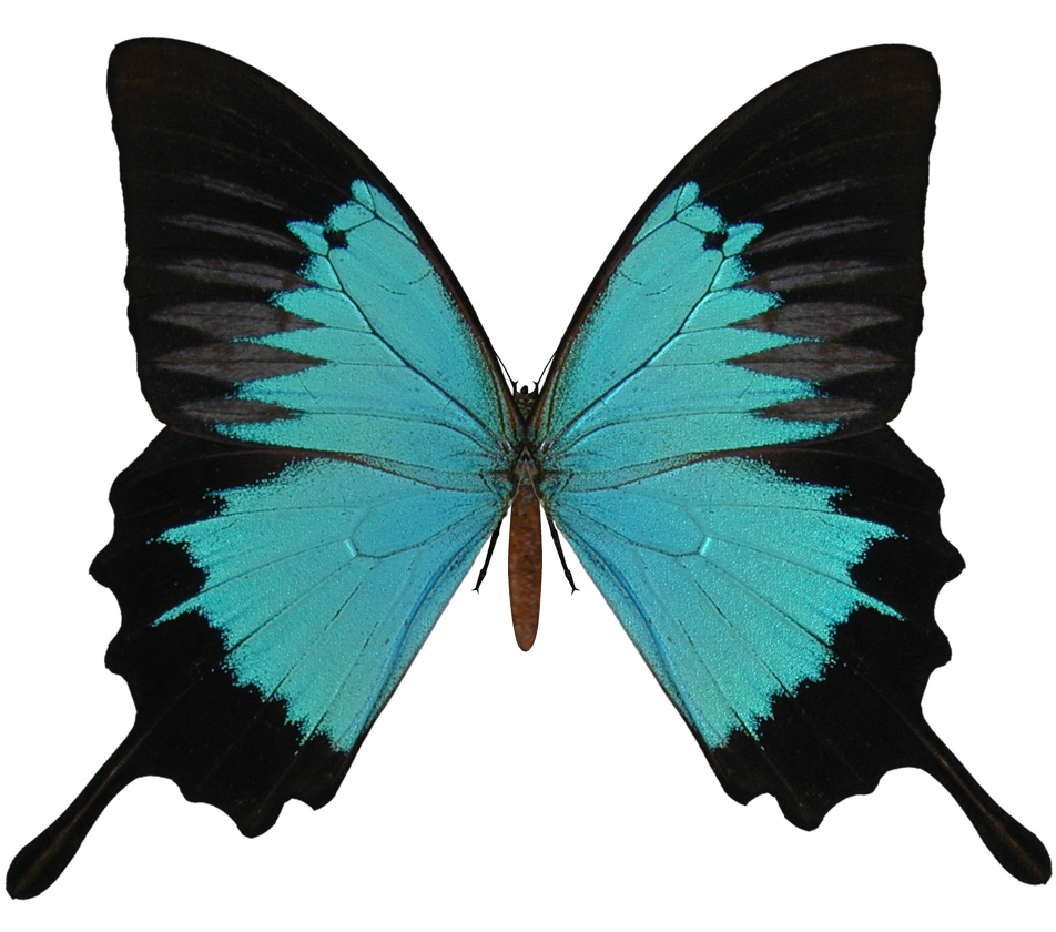 Butterflies Transparent Tumblr E-s butterfly v by elevit-