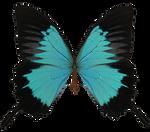 E-S Butterfly V