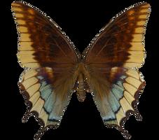 E-S Butterfly VI by Elevit-Stock
