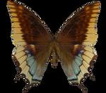 E-S Butterfly VI