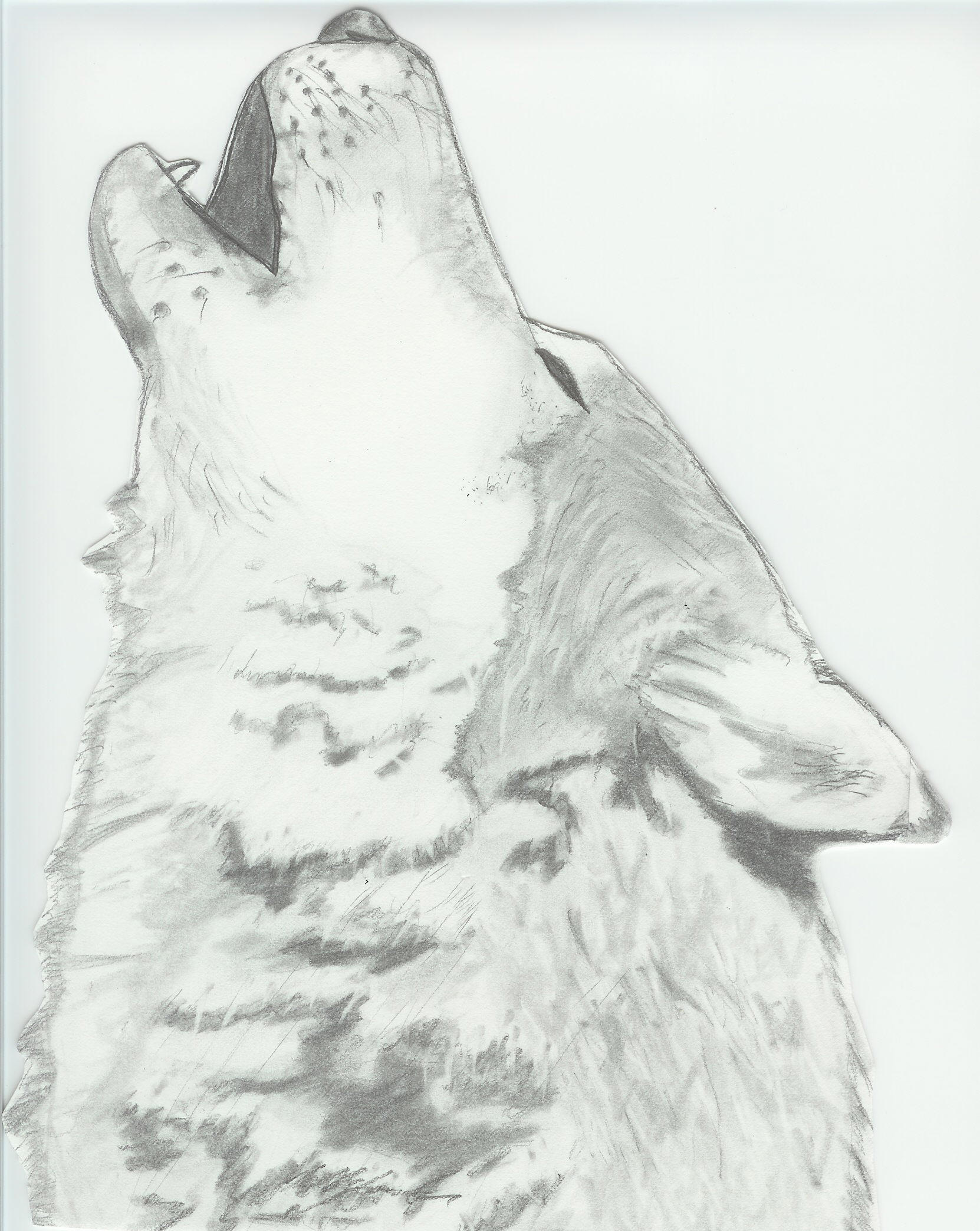 Howling Wolf By Seaofice