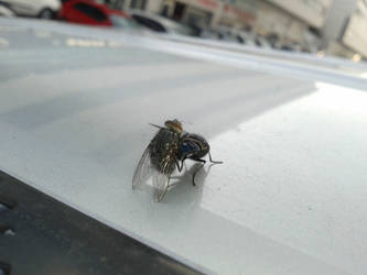 They're mating on my car.