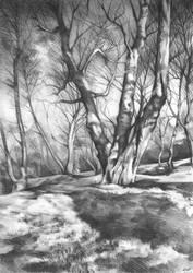 musing of trees by Katarzyna-Kmiecik