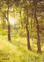 Sun Embraced Trees by Katarzyna-Kmiecik