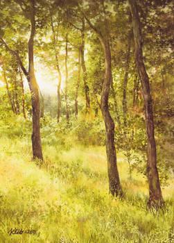 Sun Embraced Trees