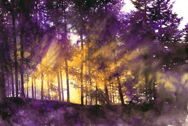 Light Through the Purple Trees by Katarzyna-Kmiecik