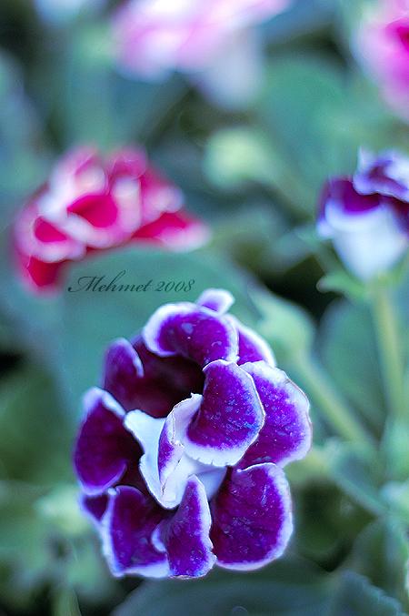 My Fractal Love by Sertechaun