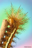 Automeris caterpillar by dllavaneras