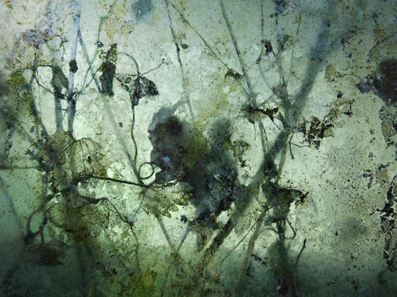 Le printemps macabre by Versatis