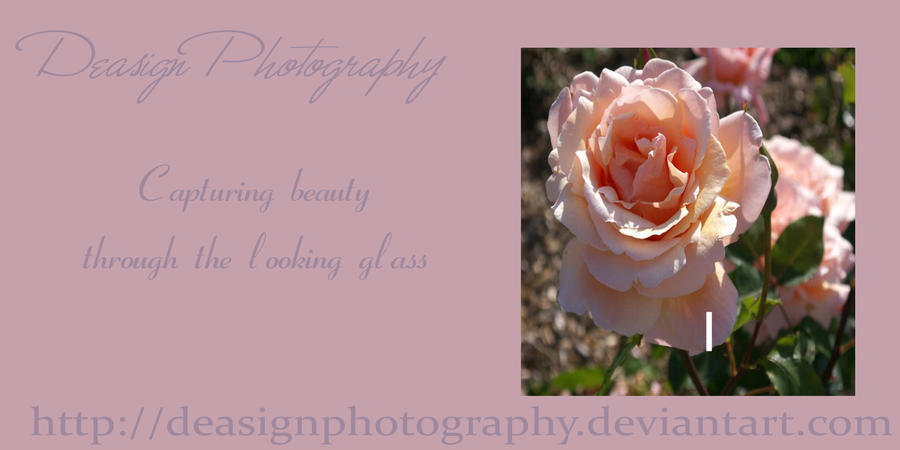 DeasignPhotography's Profile Picture