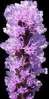Violet Flower Stalk PNG by da-joint-stock