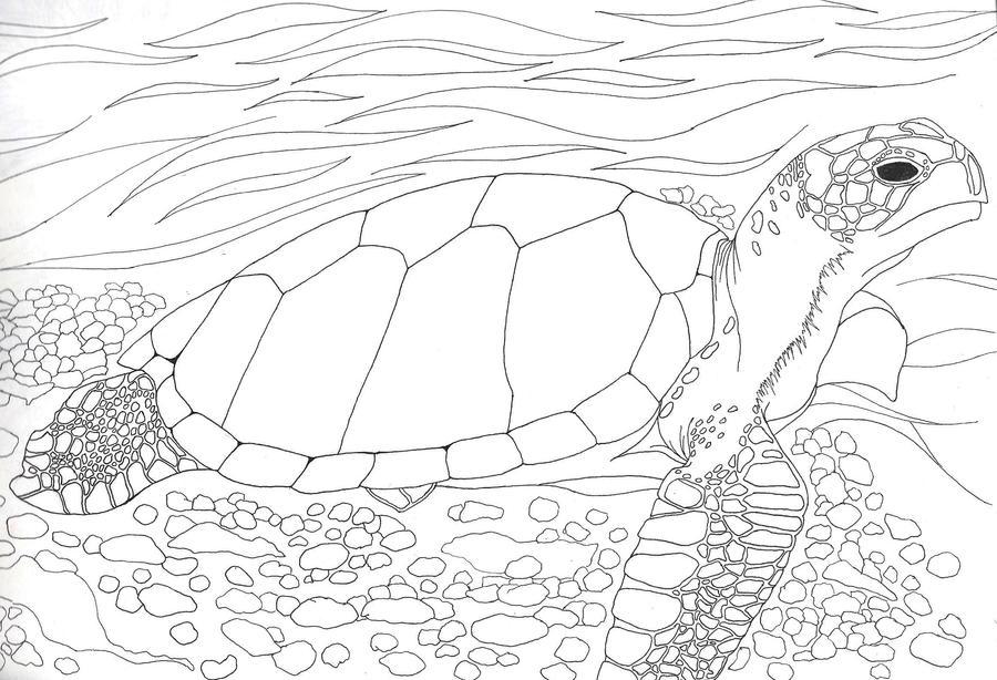 Line Drawing Turtle : Sea turtle line art by ninerva d on deviantart