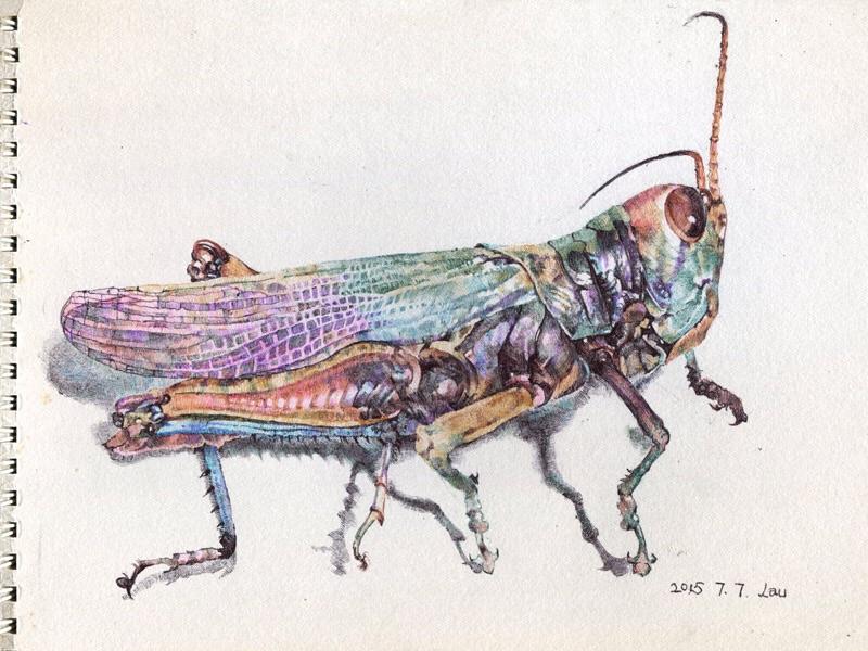 The body of big locust by hosanna9