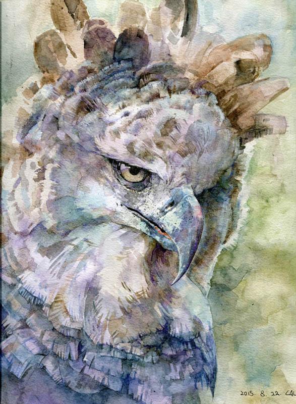 harpy eagle by hosanna9