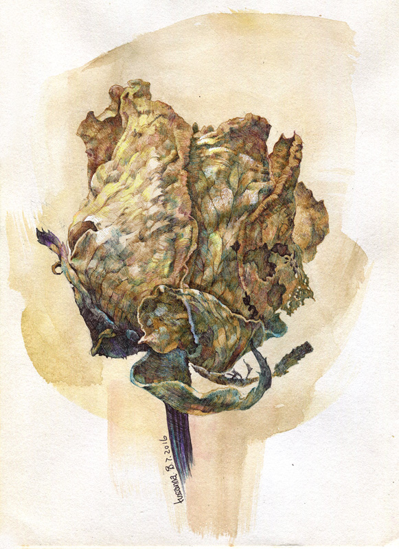 dry rose_ballpenart by hosanna9