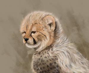 Cheeta 2 (with no shading)