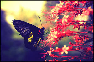 Butterfly 1 by superjunior