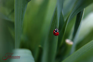 Little Ladybug by RacyCracy