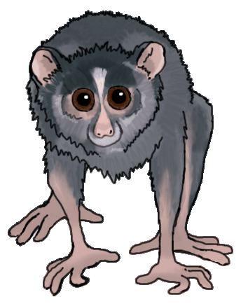 lorri__the_loris_by_munsteh-d54ztn2.png