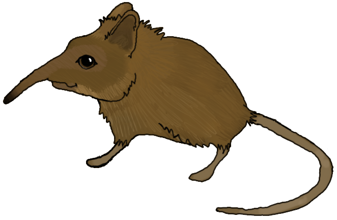 alvin_the_shrew_by_munsteh-d57gz53.png
