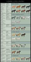 Equine coat colors