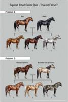 Equine Coat Color Quiz by SheWolff