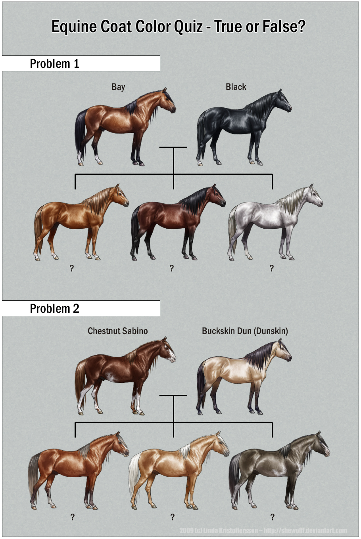 Equine Coat Color Quiz by SheWolff on DeviantArt