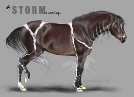 Equine character - Storm by SheWolff