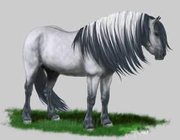 VHR - Highland Pony by SheWolff