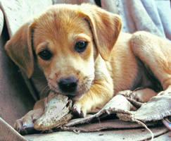 puppy_2 by djeckie