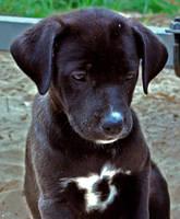 puppy_3 by djeckie