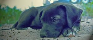 rest.... by djeckie