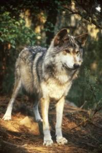 lonewolf82084's Profile Picture