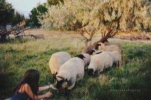 Karina and the Sheep by CameraDude