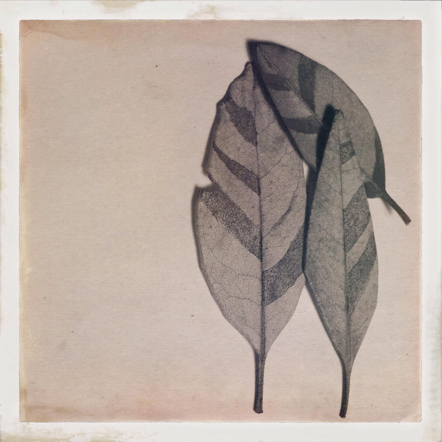 Leaves by Tanya-Dawn-Art