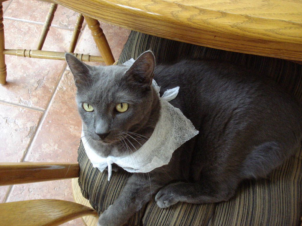 Can I has Dryer Sheet Scarf by GhostTheZombie