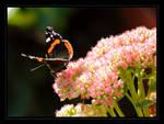 Butterfly 01 by ravenheartmetal