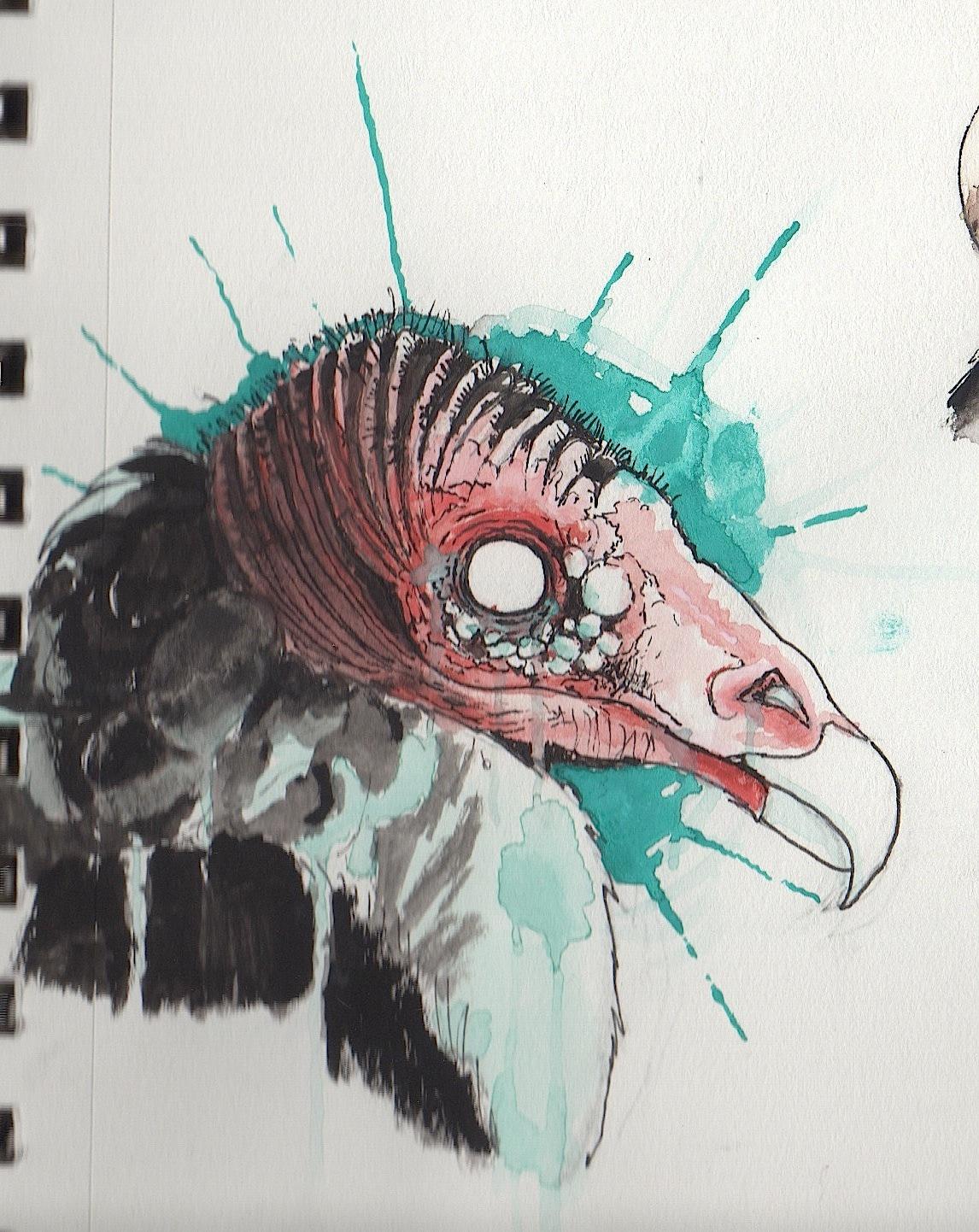 [Image: vulture_by_zemie-d8zdjn1.jpg]
