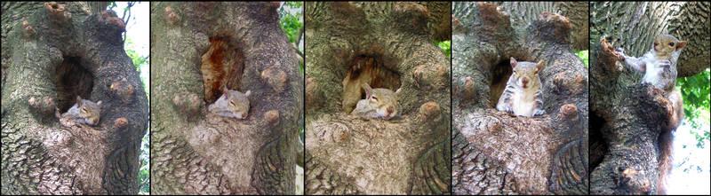 The squirrel that I awaked... Oups by Zazou8