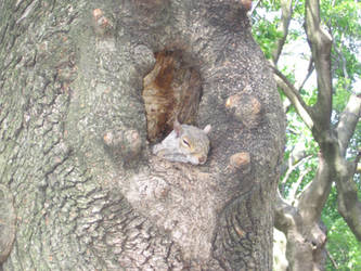Boston's squirrel 1 by Zazou8