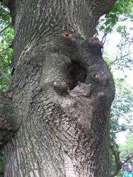 Boston's squirrel 2 by Zazou8