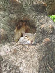 Boston's squirrel 3 by Zazou8