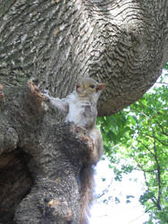 Boston's squirrel 5