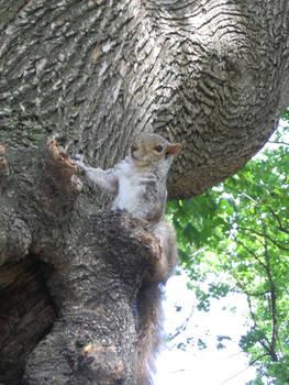 Boston's squirrel 5