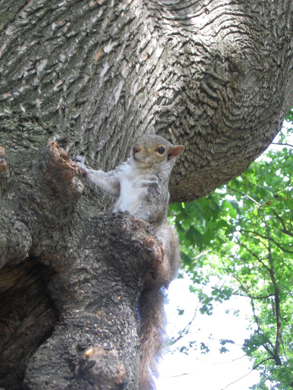 Boston's squirrel 5 by Zazou8