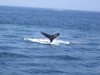 A whale in the sea by Zazou8