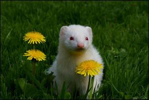 Dans les fleurs. by nelow-ow