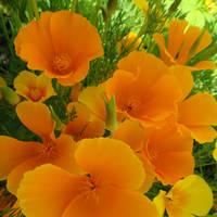 Orange Fervour by SplitEnsds